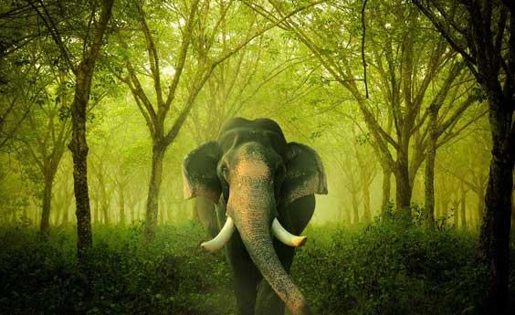 elephant apix
