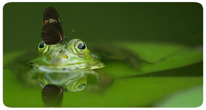 frosch schmetterling 700