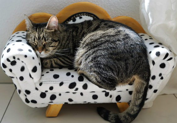katze zufrieden sofa klein 564