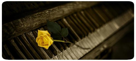 klavier rose 564