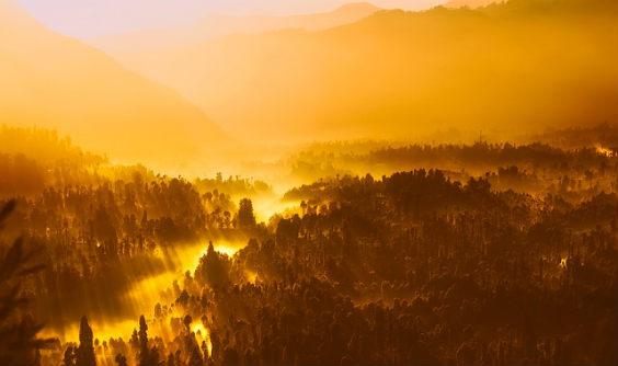 natur wald nebel morgen pl 564