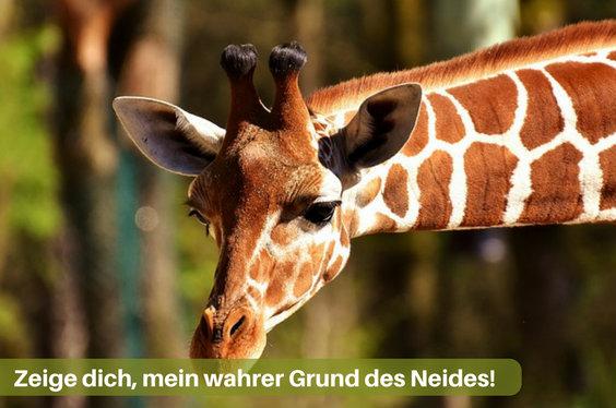 neid grund giraffe z 564