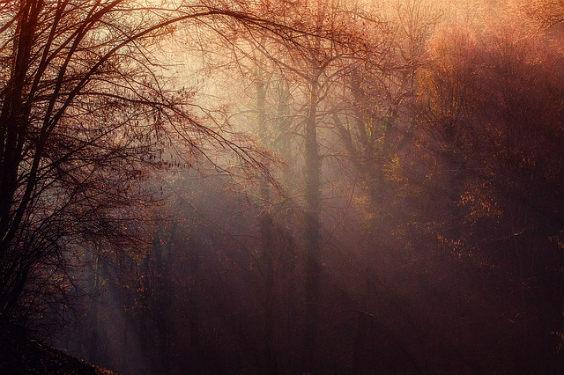 wald nebel strahlen 8j 564