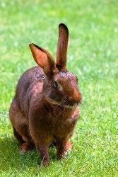 Der Hase mit den Hörnern (Fabel)