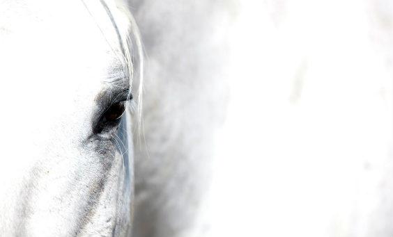 pferd auge weiss 564
