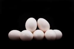 eggs250