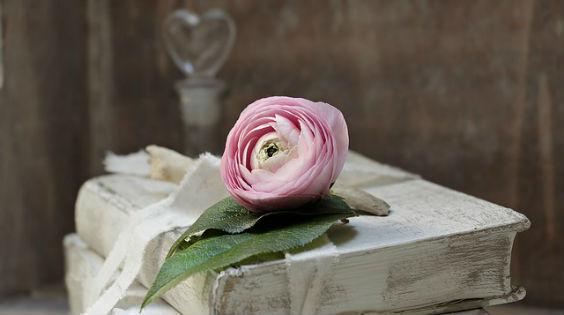 buecher weiss rose rosa 564