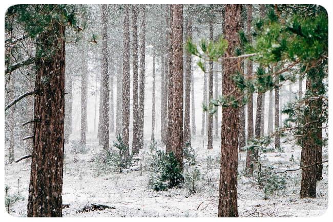 Wald Schnee