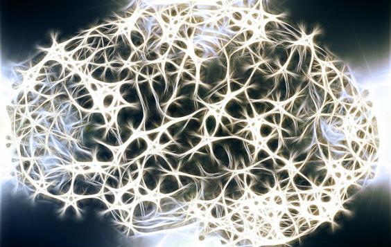 gehirn neuronen silber 564