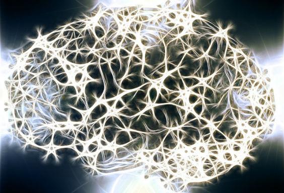 gehirn neuronen sw 564
