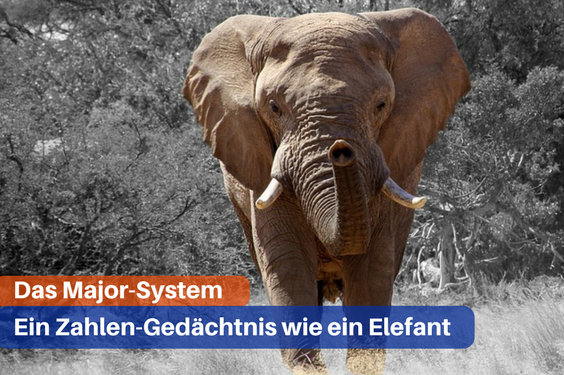 major system elefant 2t 564