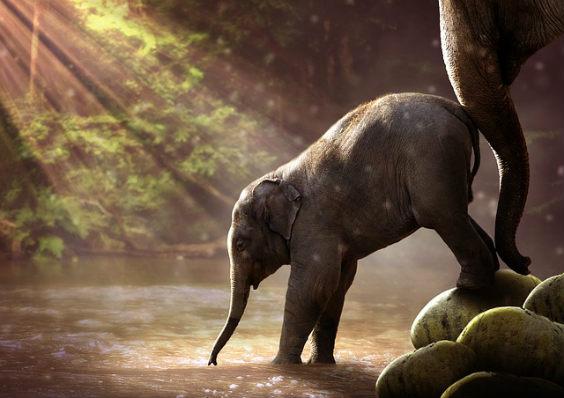 mut anschub elefant 564