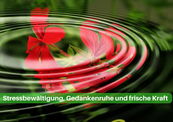 online kurs entspannung rose 564