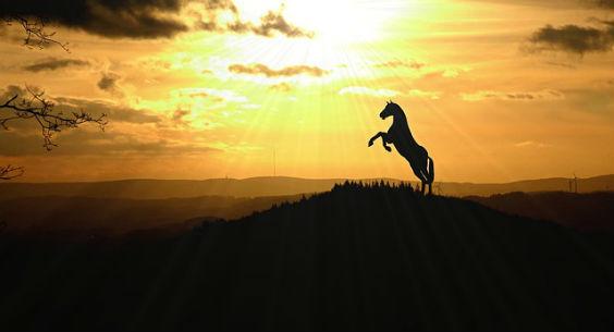 pferd steigend sonne 564