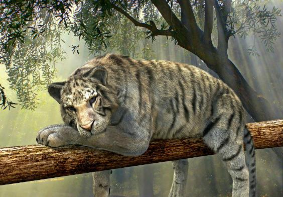tiger auf baum 564
