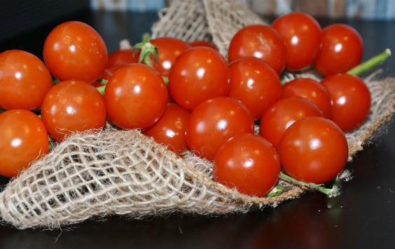 tomaten netz 564