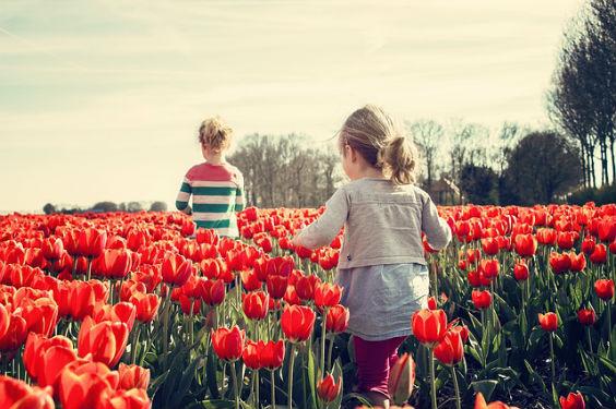 tulpen feld maedchen j1 564