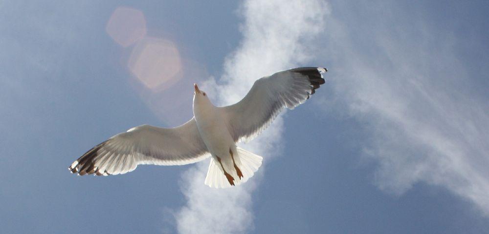 vogel freiheit 1000
