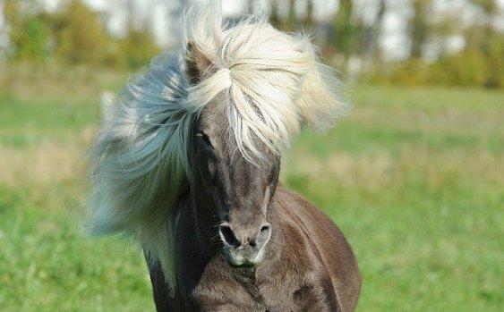 pferd frisst keinen gurkensalat