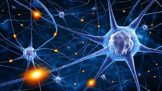 synapsen neuronation 564