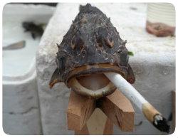 Rauchfisch