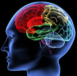 Trainieren Sie Ihr Gehirn