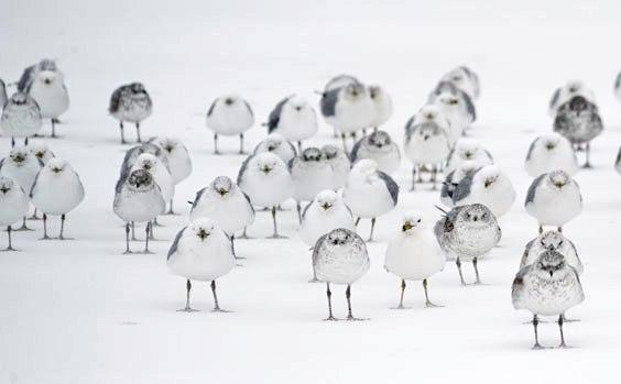 verrueckte vogelnamen 564